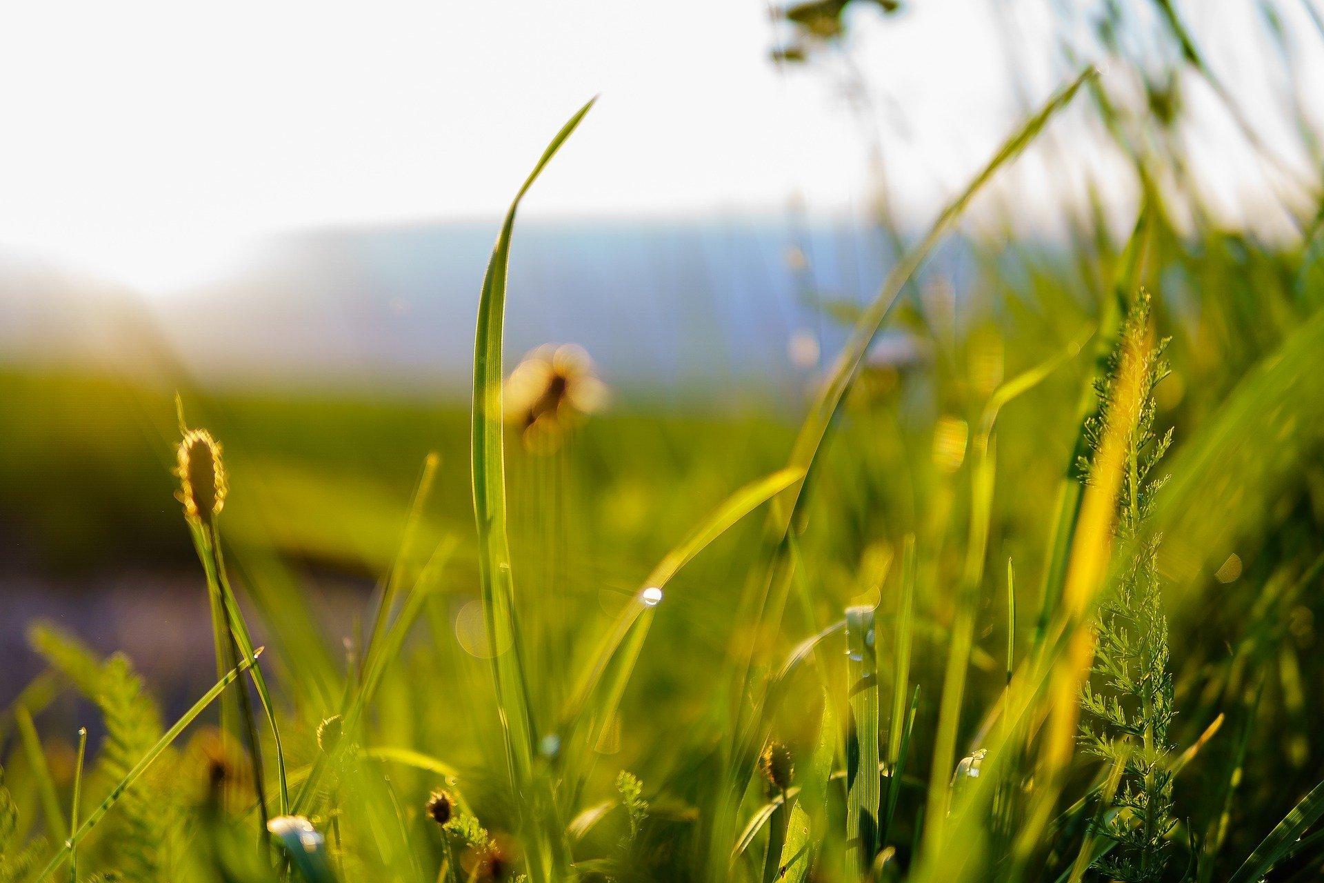 sunny-grass